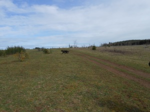 Gael field March 2013 001
