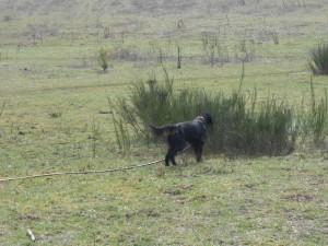 Gael field March 2013 007