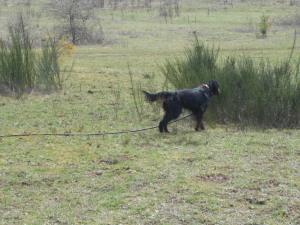 Gael field March 2013 008